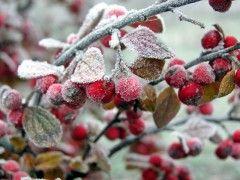 Прогноз погоди по Луганській області на добу 26 листопада