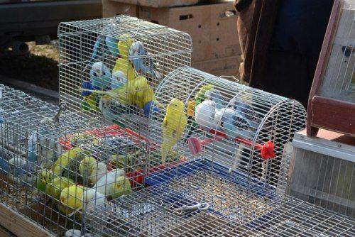 В Луганске прошла выставка голубей (ФОТО), фото-2